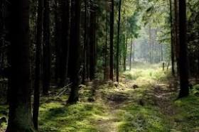 Superka mišką gera kaina